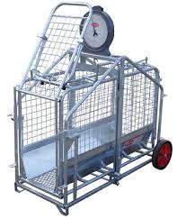 pig and lamb weigher